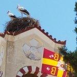 Greece Bird Tours Resmi