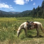 Horses grazing in beautiful Valley by Lassen National Park