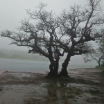 A must visit place in monsoon season, everything is covered under the fog. Don't miss the origin