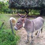 Photo of Encatello