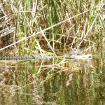 Photo of Everglades Area Tours