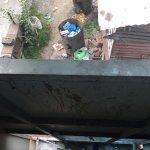 The stench of decomposing kitchen scraps below my window