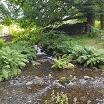 A small feed stream by Tarn Hows