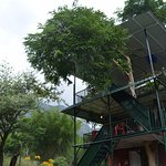 Photo de Bear Mountain Jungle Resort