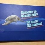 Photo of Sea Turtle Rescue Centre