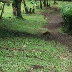 Guia Naturalista Olman Gonzalez-billede