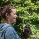 Learning about the art of falconry