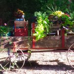 The wagon on our property