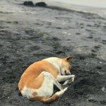 Kovalam Beach Foto