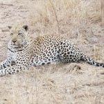 Foto de Lion Sands Ivory Lodge