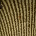 Mystery stain on carpet