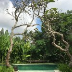 Photo of Luwak Ubud Villas