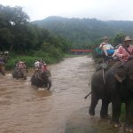 Photo of Maetaman Elephant Camp