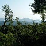 Boschi e montagne