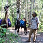 Dan with his llamas