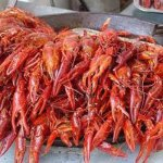 Mudbugs be good!