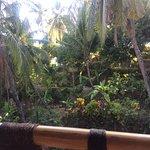Photo of Gaia Oasis Retreat-Resort