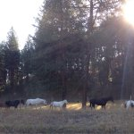 K-Diamond-K Guest Ranch Foto