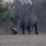 B10, the aggressive rhino