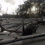 boneyard beach on Capers Island