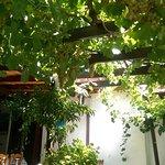 Photo de Bunch of Grapes