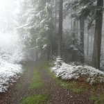 a misty shot of the trails...