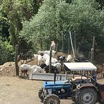 Agriturismo degli Olivi Foto