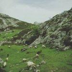 Foto de Parque Nacional de Picos de Europa