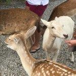 Foto de Lagoon Deer Park