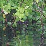 Photo de Tour the Glades
