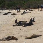 On the beach with sea lions, Santa Fe Island