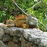 Awesome conservation area with Iguana, Flamingo and Crocs!!!