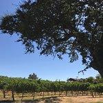 The vineyard next door