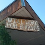 Will work for berries