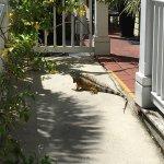 Key Lime Inn Key West Foto