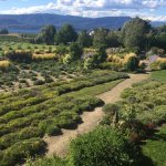 Foto di Okanagan Lavender & Herb Farm