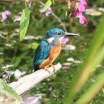 Bild från Rye Meads Nature Reserve