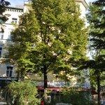 Nice tree lined street.