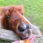 Feeding Ginger