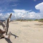 Dunes & driftwood