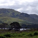 ancient Caledonian pines in Glen Affric