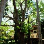 Hotel & Bungalows Mayaland Aufnahme