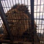 Photo of Parque Safari