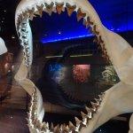 Amazing Megalodon teeth/jaws exhibit !