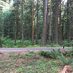 The other side of the drive way by our campsite is forest. Some other campsites are by river.