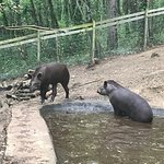 Photo of Reserve Zoologique de Calviac