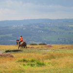 Rider at the summit