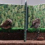 Tiny owls!