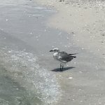 Foto de Lido Beach