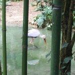 Bioparc de Doué la Fontaine